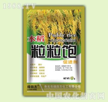 绿四方-水稻粒粒饱