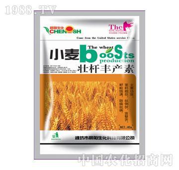 晨阳-小麦壮杆丰产素