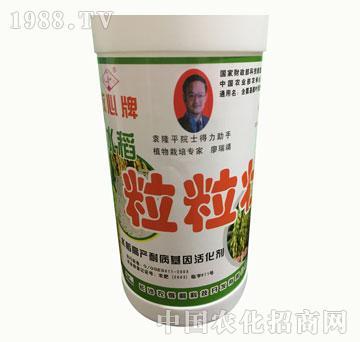 水稻粒粒饱-放心牌-稻尔