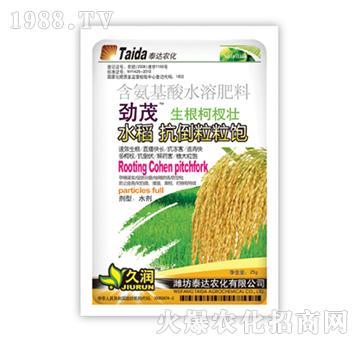 水稻抗倒粒粒饱-劲茂-泰达农化