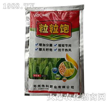 粒粒饱-小麦专用叶面肥-伟科肥业