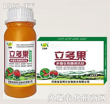 辣椒专用叶面肥-多糖生物酶诱抗肽-立多果-圣博尔