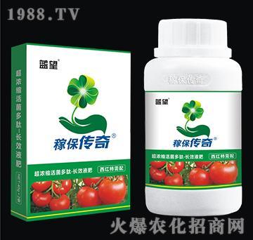 西红柿专用超浓缩活菌多肽-长效液肥-稼保传奇-蓝望
