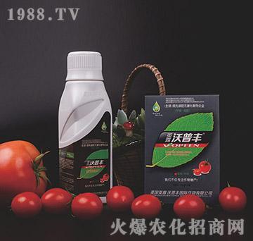 西红柿专用氨基松脂菌露母液叶面肥-沃普丰
