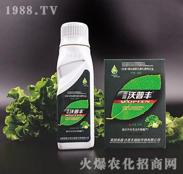 叶菜专用氨基松脂菌露母液叶面肥-沃普丰