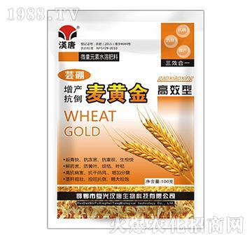 高效型增产抗倒麦黄金-芸硼-汉唐