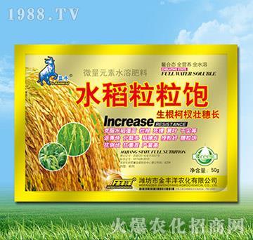 水稻粒粒饱-金丰洋