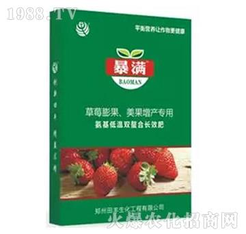 草莓膨果美果增产专用高端叶面肥-暴满-田丰生化