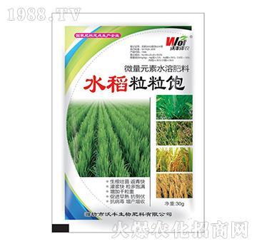 水稻粒粒饱-沃丰泽农-沃丰生物