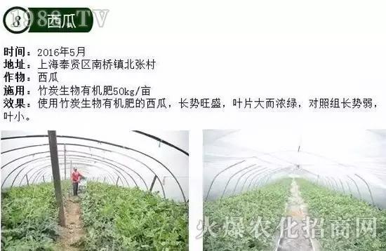 神奇的竹炭生物有机肥,用了庄长得就是好!