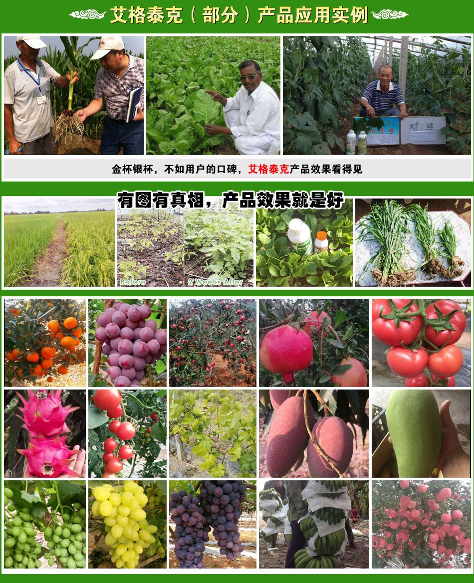 埃及艾格泰克国际农业开发技术集团有限公司