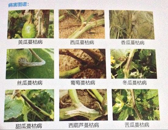 40%多福溴菌腈-蔓枯净-中科乐农2