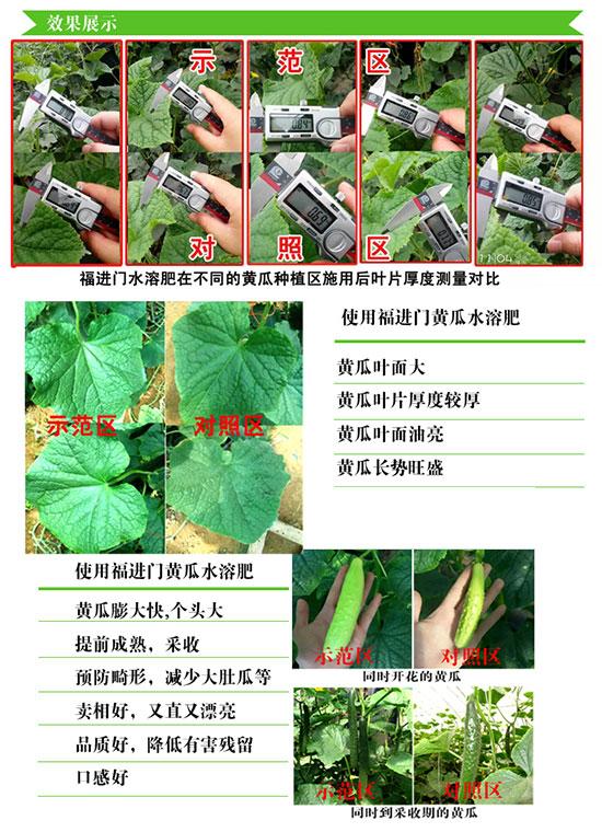 福进门黄瓜专用水溶肥4