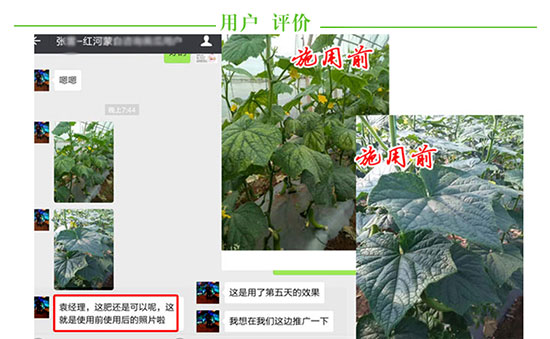 福进门黄瓜专用水溶肥5