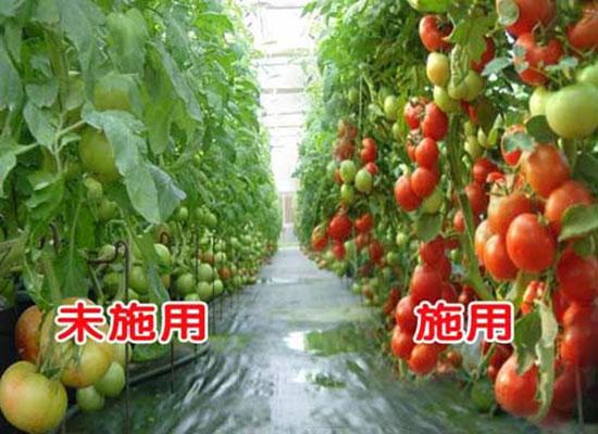 福进门含有机质水溶肥(水剂)4