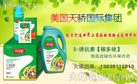 诺倍丰辣椒专用,提高果实采摘率,产量大大提升!