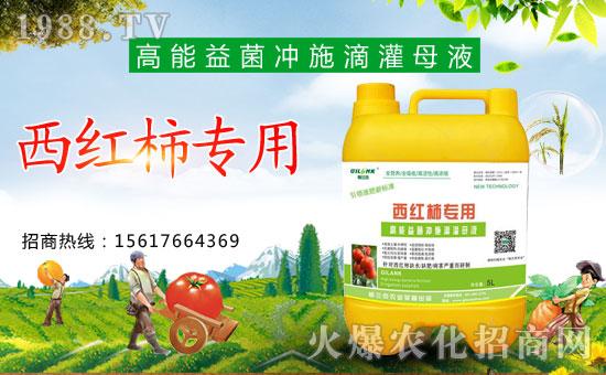 格兰克西红柿专用高能益菌冲施滴灌母液