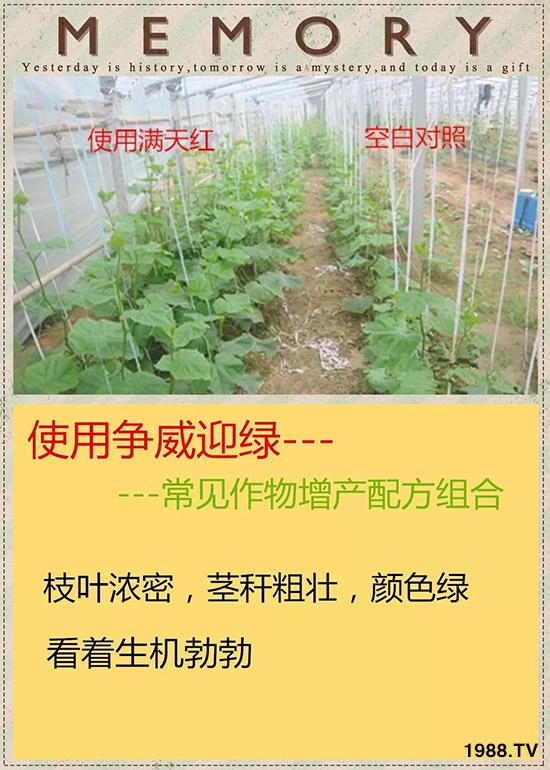 河南省满天红植物保护有限公司