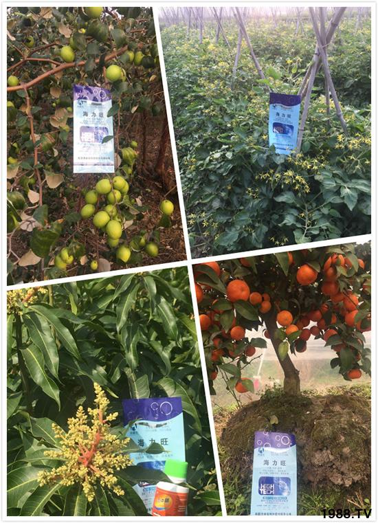 英国奥睿施特种肥料有限公司