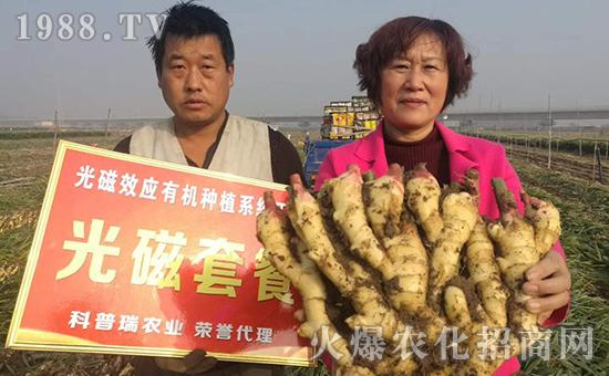 陕西高效农业有限责任公司