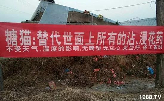 腾丰农业国际贸易有限公司