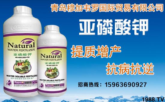 ���ZÖ⛖�\_【产品特点】  1,本品为亚磷酸钾高浓缩液,使用后能调节作物气孔开