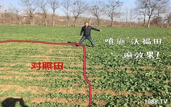 秋茬蔬菜定植季,只需一招:缓苗生根快,棵壮抗病抗死棵!3.webp