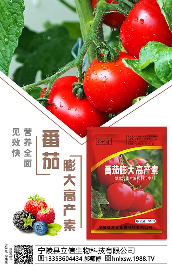 番茄膨果慢是什么原因?番茄膨果期膨果措施!