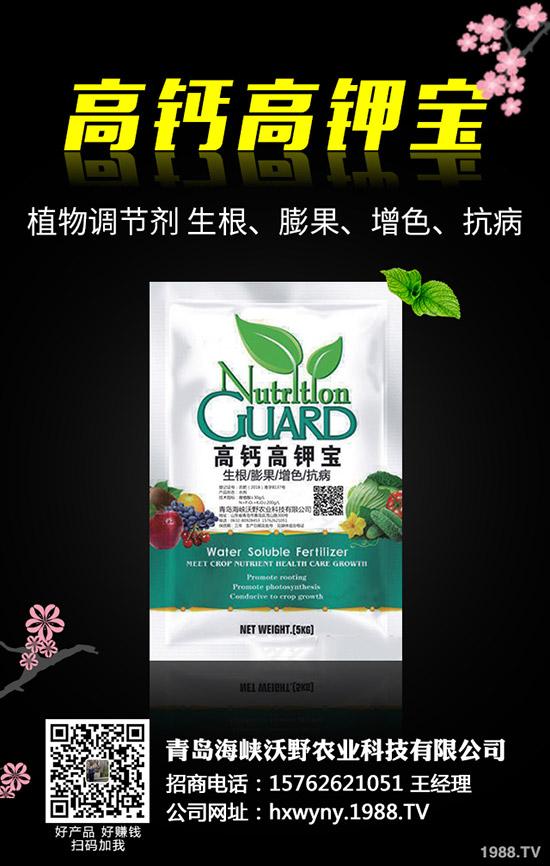 油葵种植前需要准备哪些工作,油葵种植技巧有哪些?