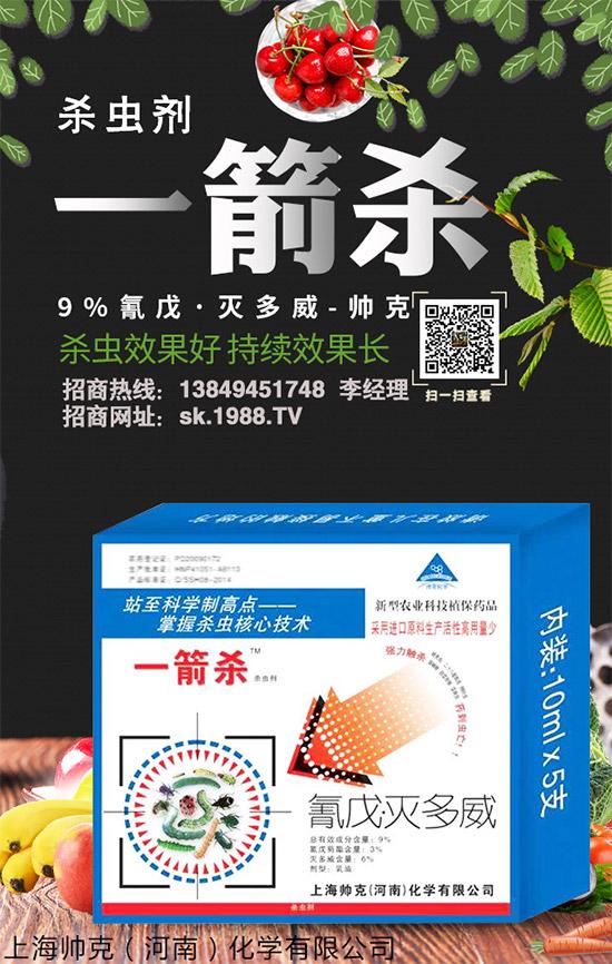 棉铃虫的为害您知道多少?棉铃虫防控技术经验,值得参阅!