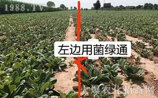农贝得农业