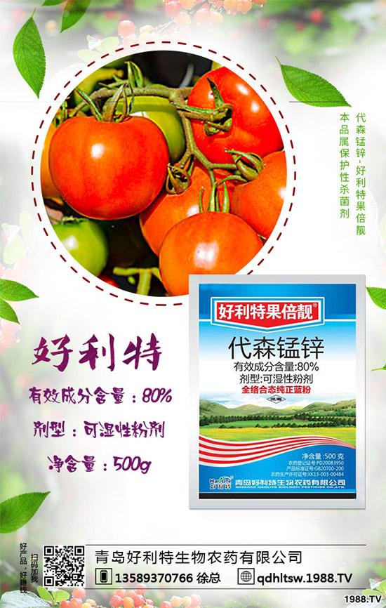 番茄炭疽病来袭,产量下降!防治手册有哪些?
