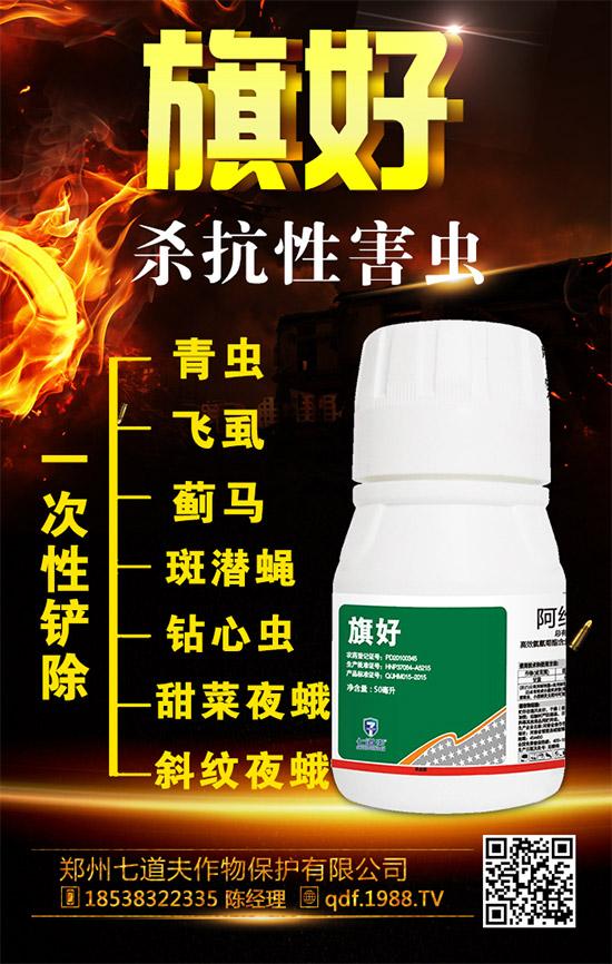 大姜钻心虫如何防治?大家都在用的生姜钻心虫防治措施!
