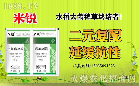 大龄稗草难防除?到底该用什么药?水稻大龄稗草防治方案