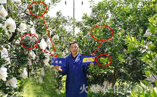 柑橘弱树复壮,状元三宝先行!