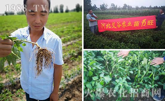 蔬菜育苗期间病害频发怎么办?蔬菜育苗期病害管理