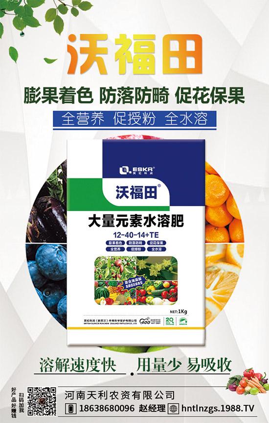 着色不均匀算不上好葡萄!促进葡萄着色的好方法!提前成熟,效益高!