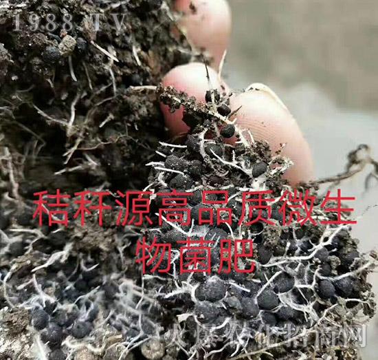 """果树秋肥是金,冬肥是银,春肥是破铜烂铁-施肥就用""""秸秆源黄腐酸肥料""""!"""
