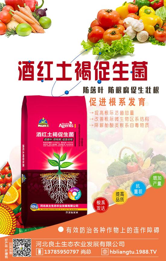 作物根系长不好,都是白忙!这个产品,促进根系发育,增产效果显著!
