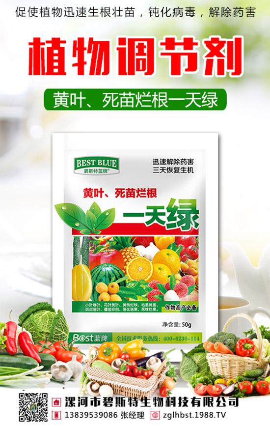 蔬菜死苗��根不重�,增�a都是空�!如何防治蔬菜死苗��根?