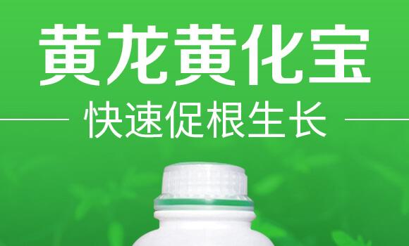 黄龙黄化宝-巴斯福_01