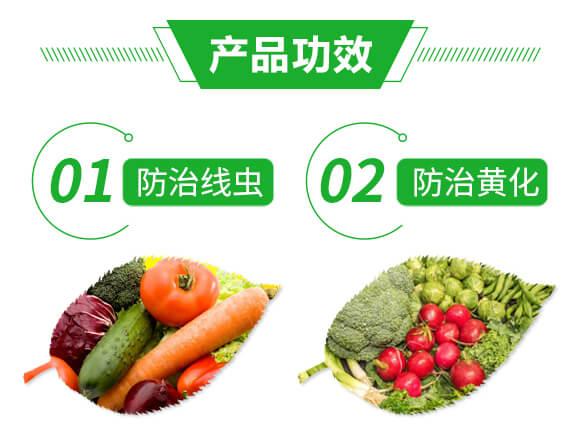 黄龙黄化宝-巴斯福_05