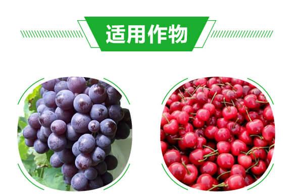 小金豆_07