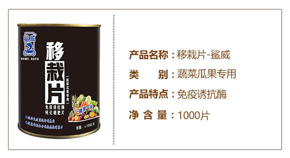 蔬菜瓜果专用移栽片-鲨威-高晟_03