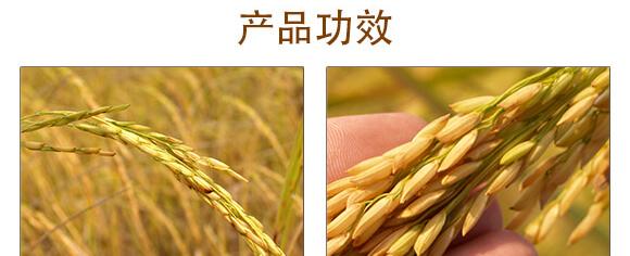 20%咪鲜・三环唑-巴特力-生农世泽_04_02