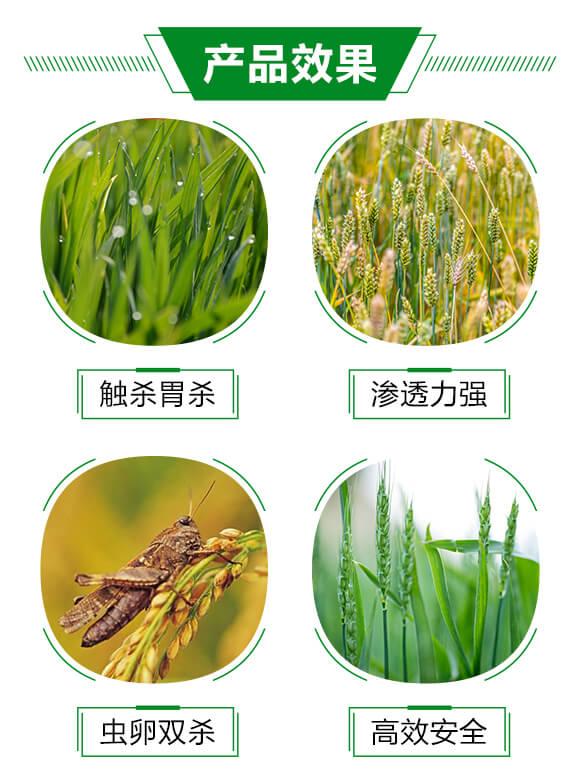 6%联菊・啶虫咪-秦农_03