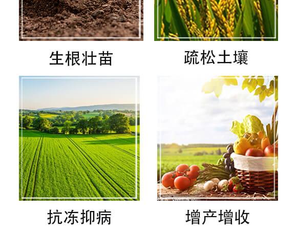 含氨基酸水溶肥料-裕丹白-欧格纳科_05