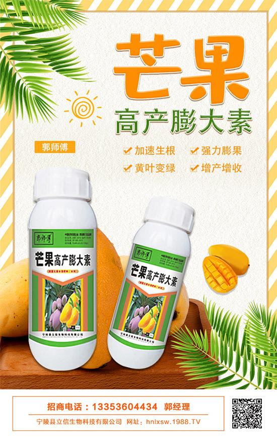 芒果的膨大期生长这么快,管理施肥要注意了!