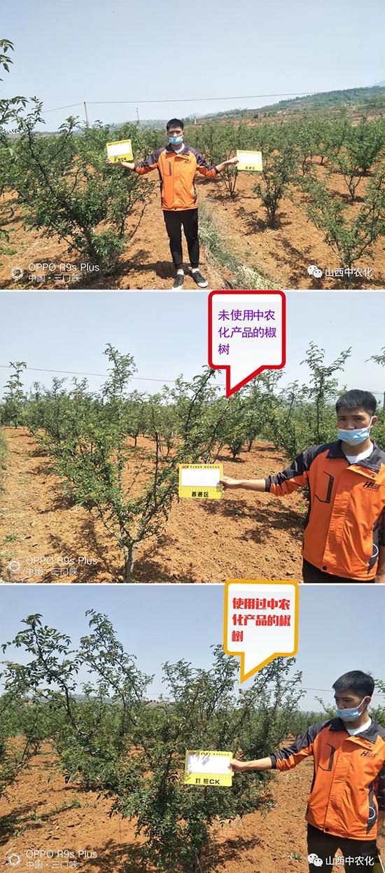 【疫路同行】被中农化承包的花椒,让你不再为花椒销路发愁
