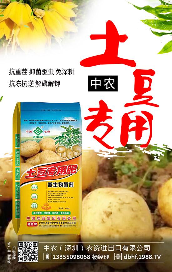 马铃薯重茬危害原来这么大!99%农户不明白!马铃薯重茬怎么解决?